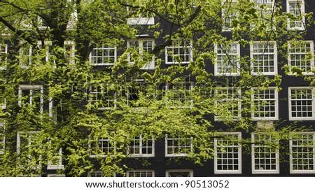 Tree and windows - stock photo