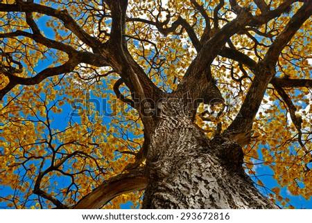 Tree and yellow flowers - stock photo