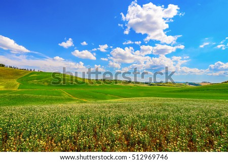 Tree and yellow hills in a tuscany summer landscape. Siena countryside view.