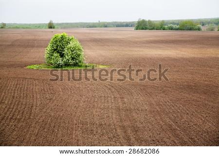 Tree at plowed field - stock photo