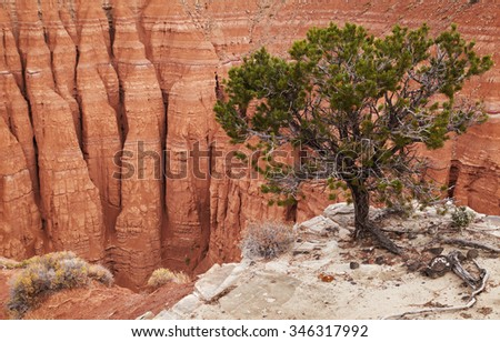 Tree at the canyon edge, Cathedral Valley, Capitol Reef national park, Utah, USA - stock photo