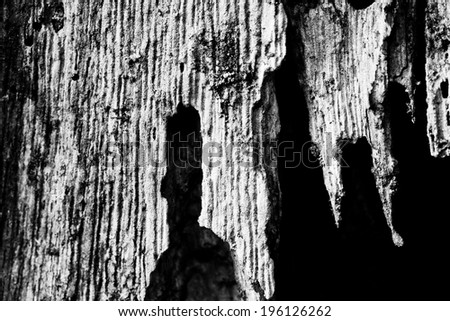 tree bark abstract - nature shapes the woods  - stock photo