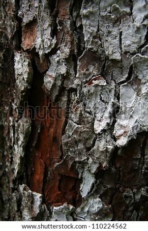 Tree Bark at Mt Kilimanjaro climbing expedition in Tanzania, Africa - stock photo