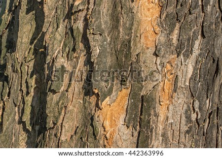 Tree bark background. Wooden bark pattern. Old tree bark backdrop. Tree bark texture. Textured layered wooden surface.  - stock photo