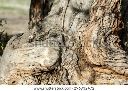 tree bark. Bark of an old tree - stock photo