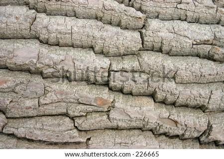 Tree bark closeup. - stock photo