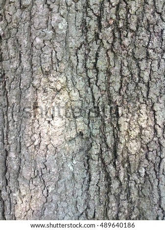 Tree Bark - Illustrative