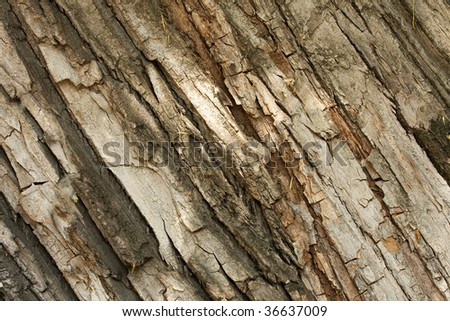 Tree bark, rough, organic texture background - stock photo