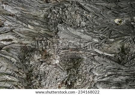 Tree bark surface texture                                - stock photo
