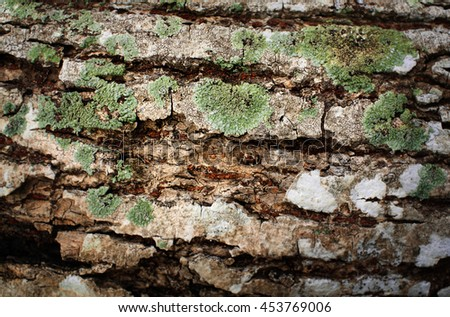 Tree bark texture and Lichen, Hypogymnia physodes growing on a tree.