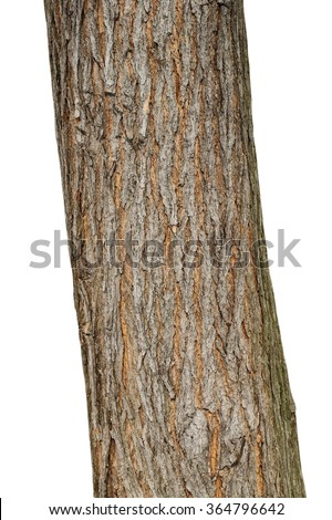 Tree bark texture isolated on white, oak wood background