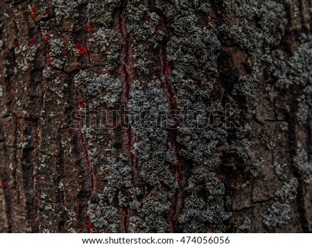 Tree bark texture. Old Wood Tree Texture Background Pattern. Tree bark texture wallpaper