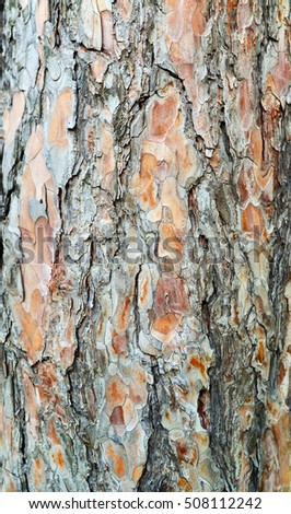 tree bark texture plant nature pattern background