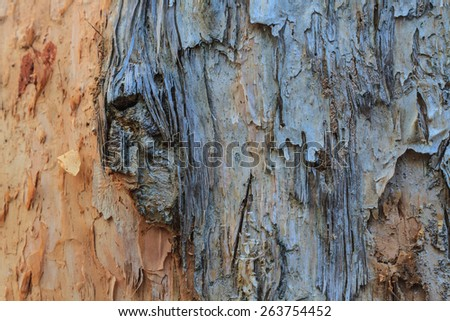Tree bark texture,texture of bark wood use as natural background - stock photo