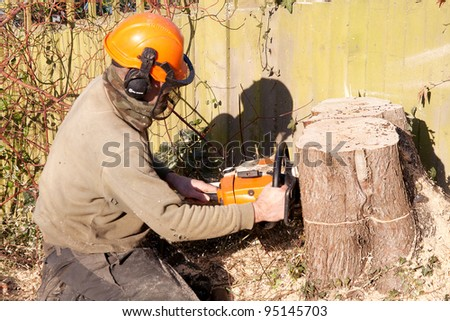 Tree being cut to the ground with chainsaw