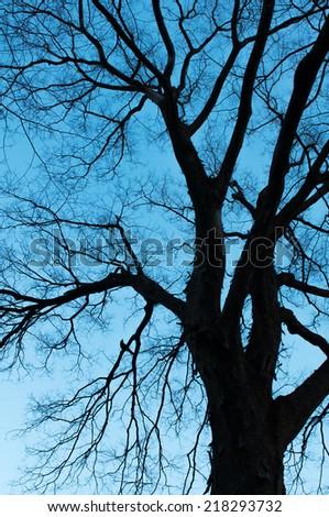 Tree black silhouettes  - stock photo