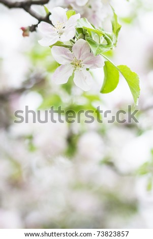 Tree blossom in spring - stock photo