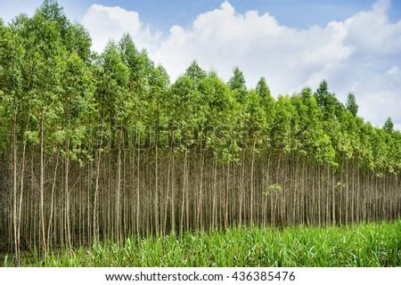 tree border forest - stock photo