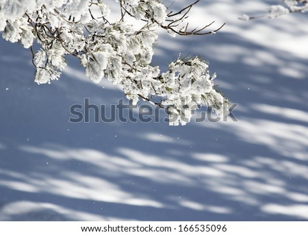 Tree branch full of falling snow in a winter decor - stock photo