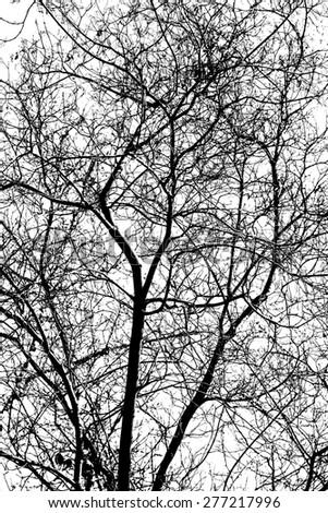 tree branch silhouette - stock photo