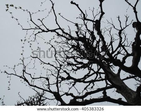 Tree branch silhouette. - stock photo