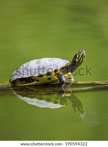 tree branch with sun turtle
