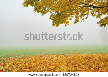 Tree branch with yellow trees in fog - stock photo