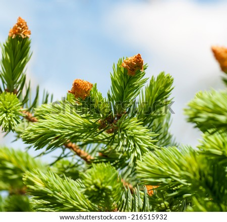 tree branch with young shoots against the sky - stock photo