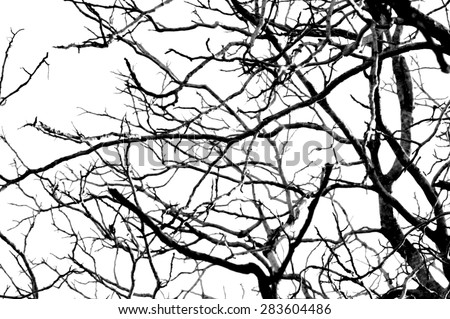 Tree branches abstract background - stock photo