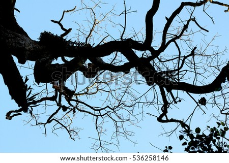Tree Branches Abstract Background ( Art of Nature ).