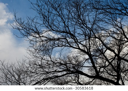 Tree branches against a cloudy sky