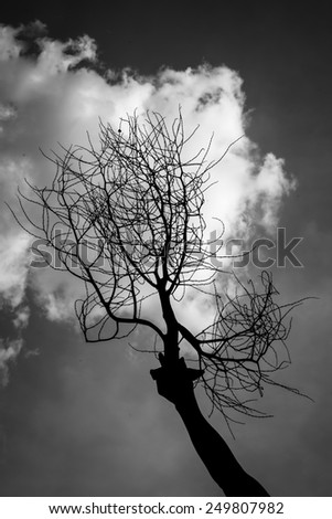 Tree Branches Against Sky Black and white - stock photo