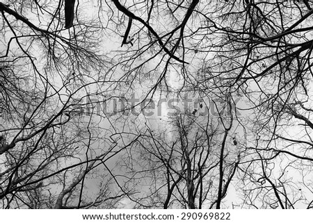 Tree Branches Against Sky Black & White Background
