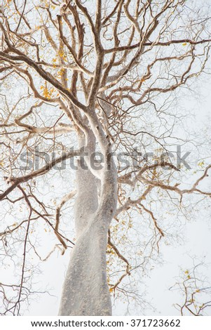 Tree branches for background. - stock photo
