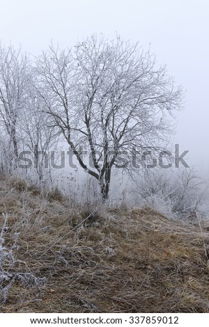 tree branches in the snow. Photo of snow covered branches of plants and trees in winter