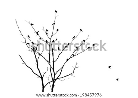 Tree  branches no leaves with bird fly - silhouette  - stock photo