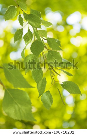 tree branches on a green background