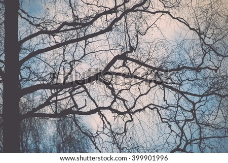 tree branches on blue background in winter - vintage film effect