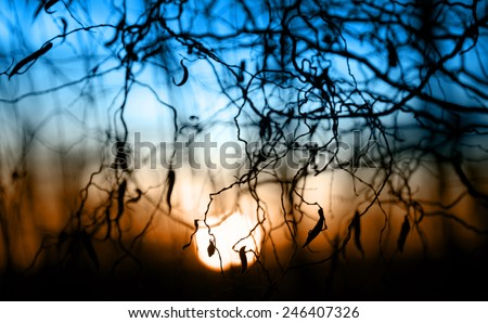 Tree branches on dramatic sunset sky - abstract photo - stock photo