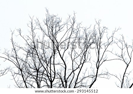 tree branches silhouette on white background - stock photo