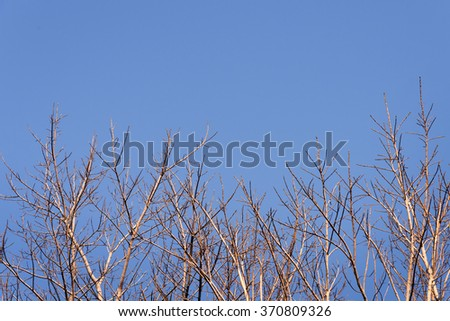 tree branches with blue sky background - stock photo