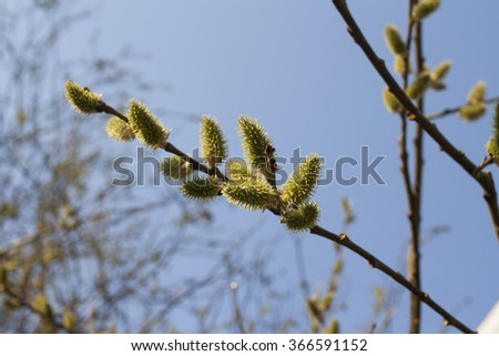 tree buds in the sky