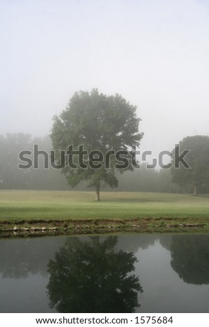 Tree by pond, blanketed in fog, early morning.