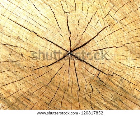 tree circle texture - stock photo