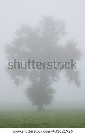 Tree contour in the morning mist in a meadow