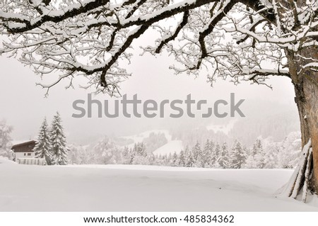 tree covered by snow in snowy landscape