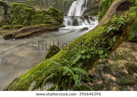 Tree covered in green moss with cascading waterfall in background at Janet's Foss in North Yorkshire, UK. - stock photo