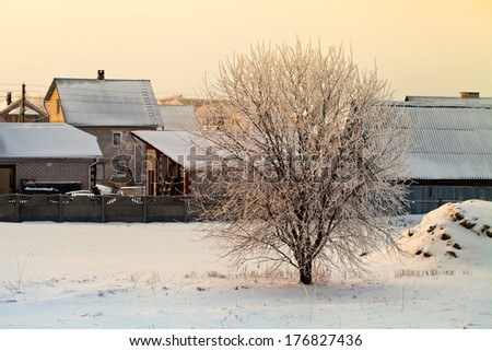 Tree covered with frost in winter sunny morning on the background country houses. - stock photo