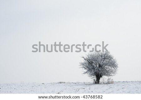 Tree covered with snow on horizon in winter meadows