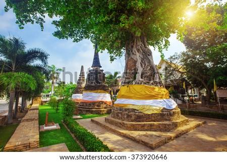 Tree covers ancient pagodas at Wat Na Phra Men - stock photo